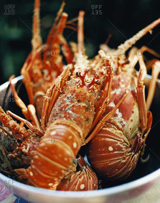 Close up of lobster in a bowl