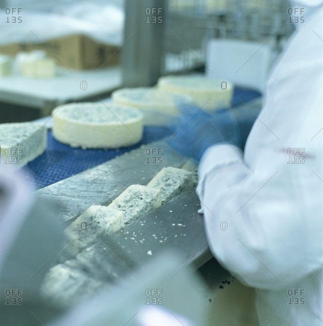 Cheese on a conveyer belt being inspected by factory worker