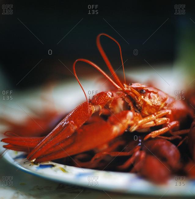 Close up view of crayfish