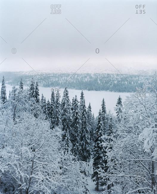 Scandinavian forest during winter - Offset