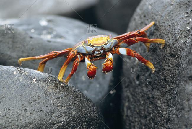 A crab, close up