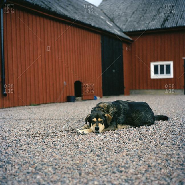A dog on a courtyard, Halmstad, Sweden
