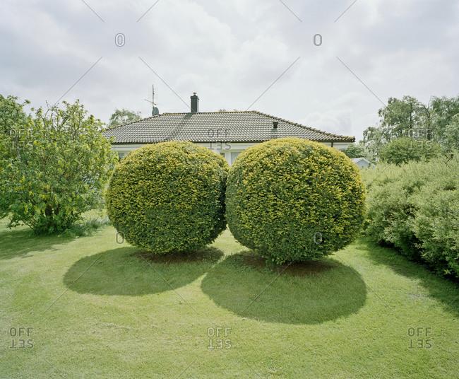 Box-hedge in a garden, Sweden