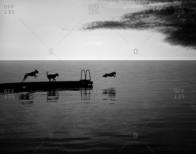 Dogs on a jetty jumping into the ocean, Skane, Sweden