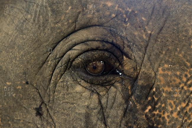 Close up of an elephant's eye in Laos
