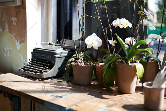 Orchids and a vintage typewriter in a sunny cafe interior