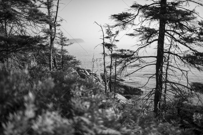 View of coastline through trees in Acadia National Park, Maine