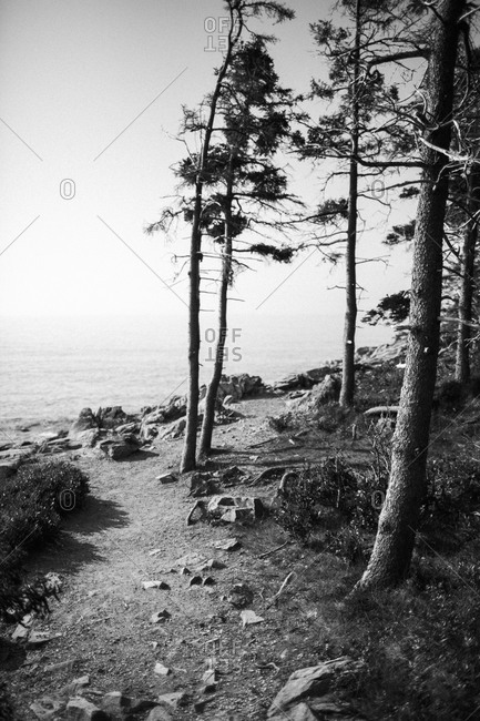 View of Trees and rocky shore in Acadia National Park, Maine