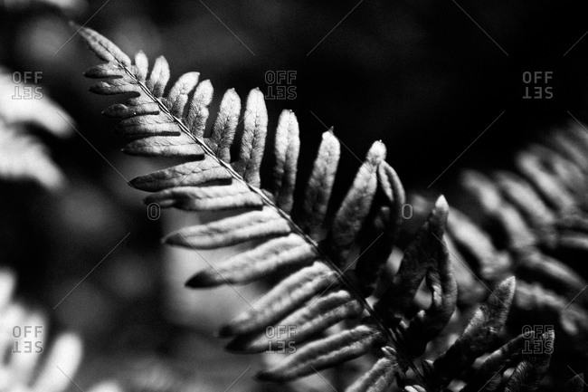 Detail of a fern leaf in Acadia National Park, Maine