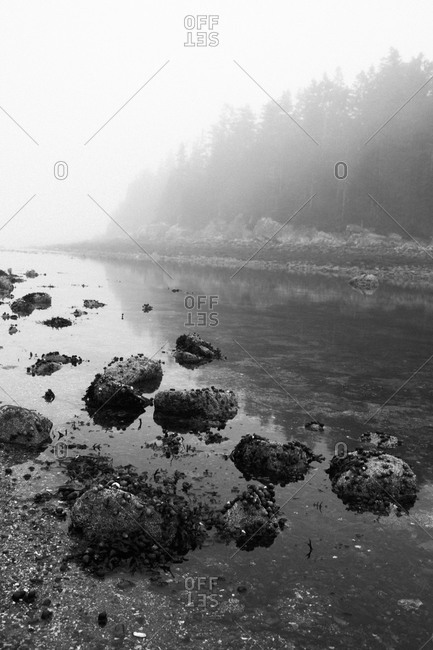 Fog over a pond in Acadia National Park, Maine