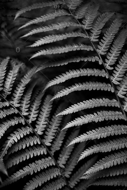 Close-up of ferns in Acadia National Park, Maine