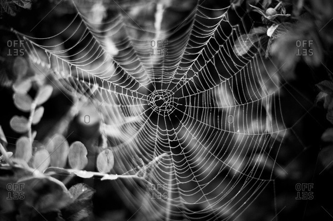 Spider web and dew drops in Acadia National Park, Maine
