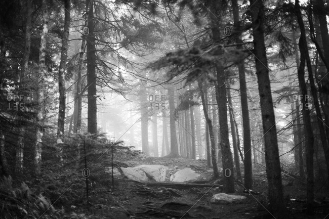 Foggy forest in Acadia National Park, Maine