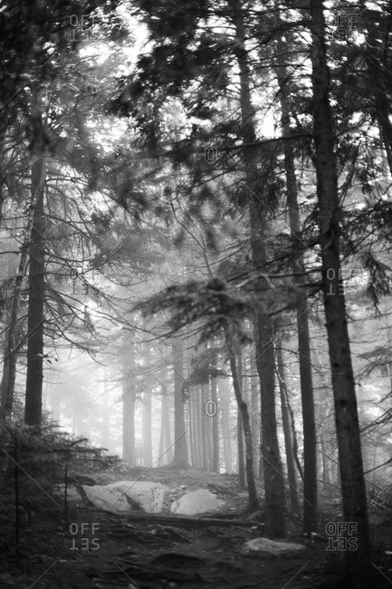 Misty forest in Acadia National Park, Maine