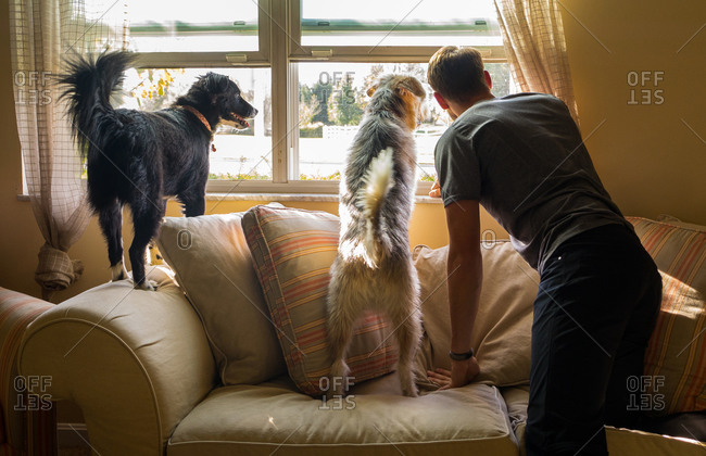 Man and his dogs looking out window