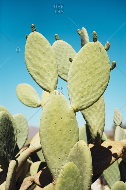 Cactus and blue sky in Solitaire