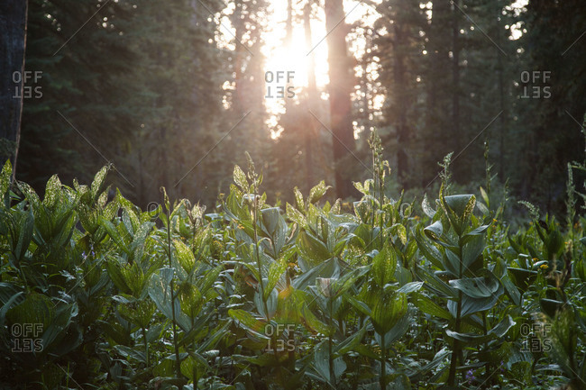 Green vegetation in a sunlit forest