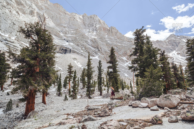 Woman hiking a mountain with sparse trees