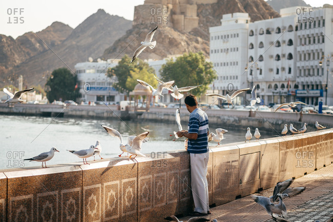 Man feeding seagulls along the corniche in Muscat, Oman