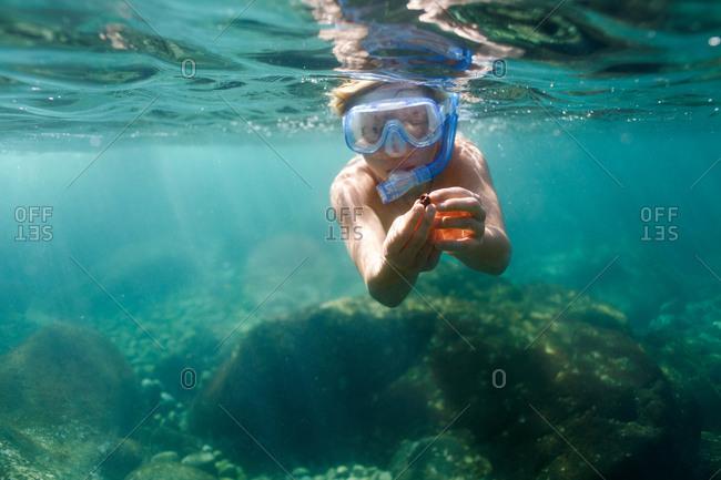 Boy snorkeling holding up find