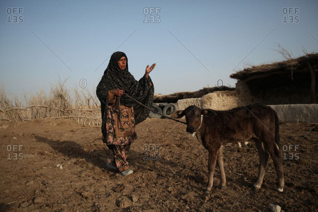 An Iranian woman and her little cow