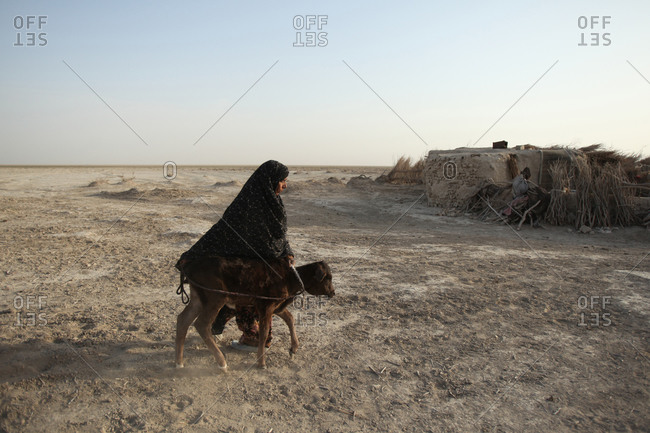 Iranian woman walking her little cow