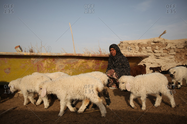 An Iranian woman and her sheep in a village in south Iran