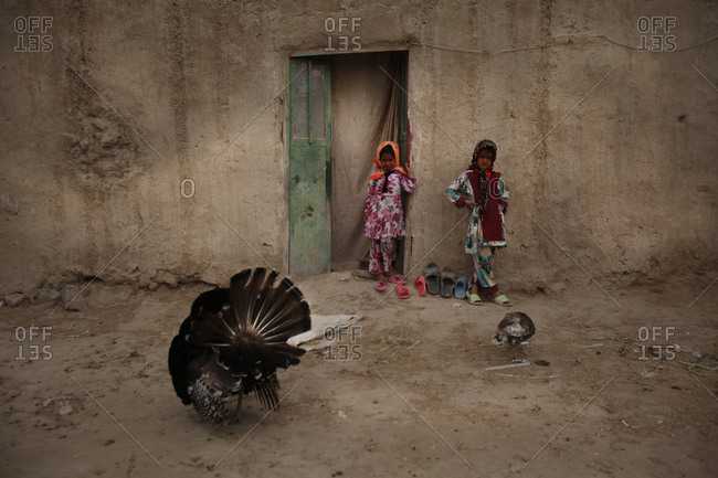Zabol, Iran - May 2, 2014: Kids looking at a rooster in a village in Iran