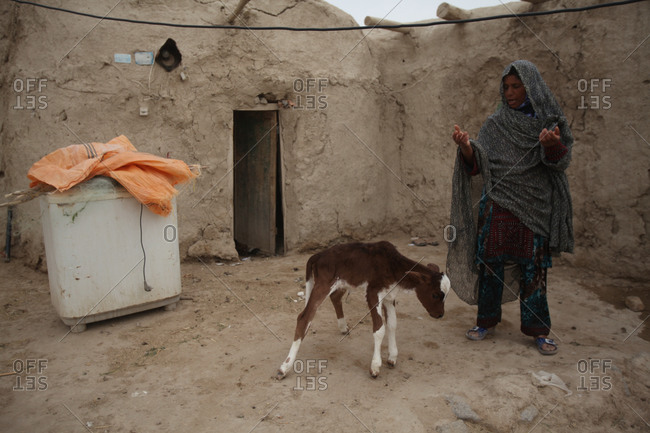 A woman with a calf in village in Iran
