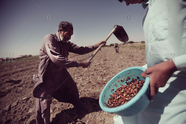 Farmers working in a field
