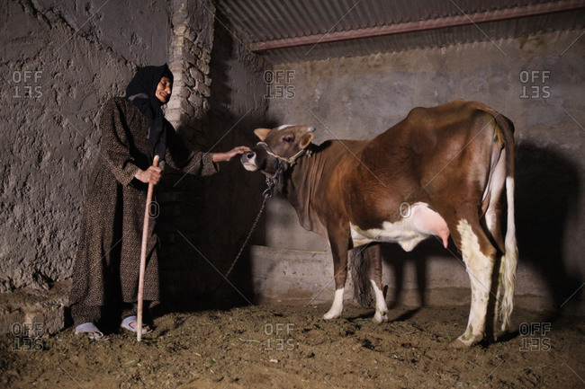 Old woman patting a cow in Iranian village