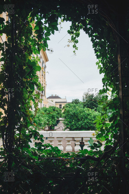 View through opening of vine covered trellis