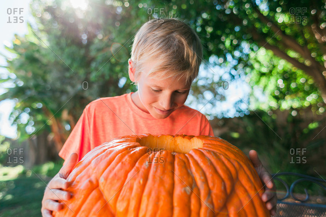 Boy looking inside a large, hollowed-out pumpkin