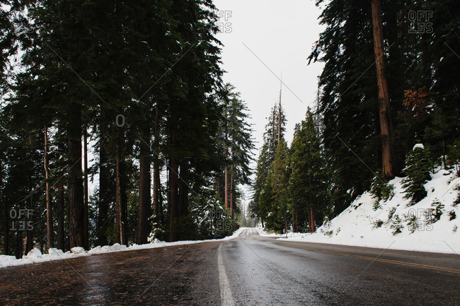 Wet road in a snowy forest
