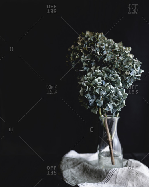 Blue hydrangeas in a vase