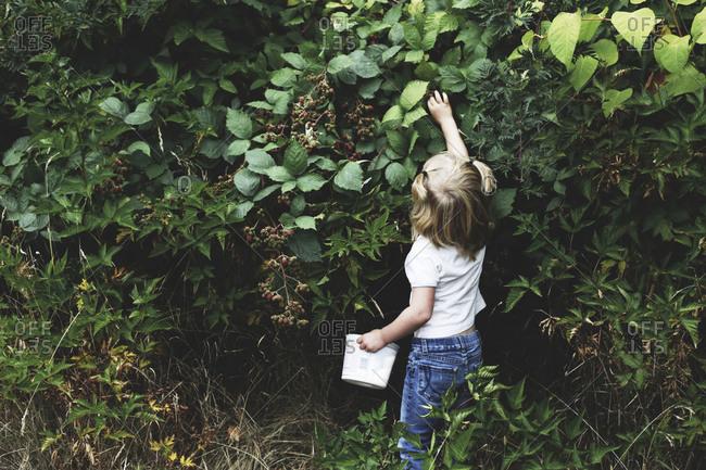 Child picking blackberries