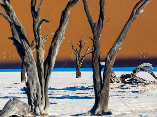 Dead Vlei in front of dune in Namib Desert