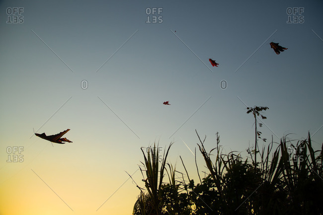 Kites flying in a twilight sky