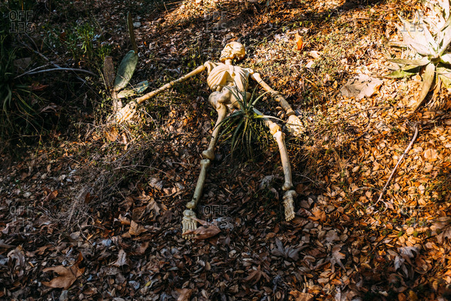 Plastic skeleton in a pile of leaves