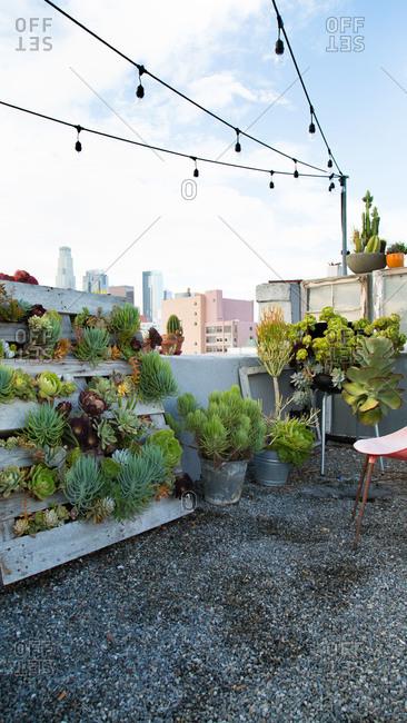 Desert plants on a rooftop garden