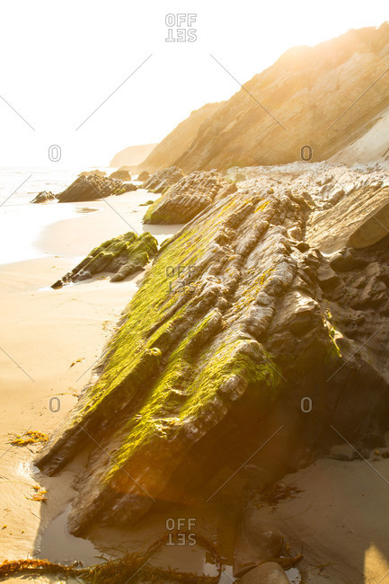 Moss growing on a slanted rock face at a beach