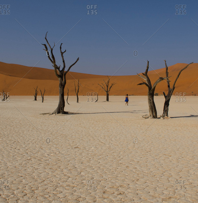 Woman walking amidst dead trees in a desert landscape