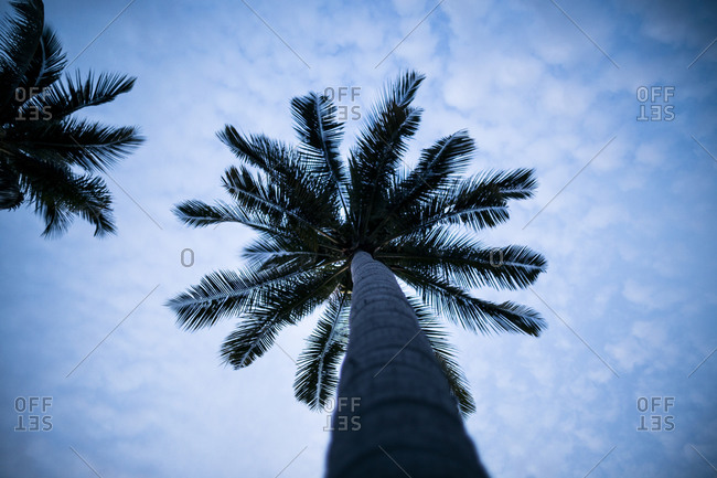 Low angle shot of palm tree