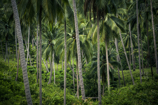 Palm trees in jungle setting