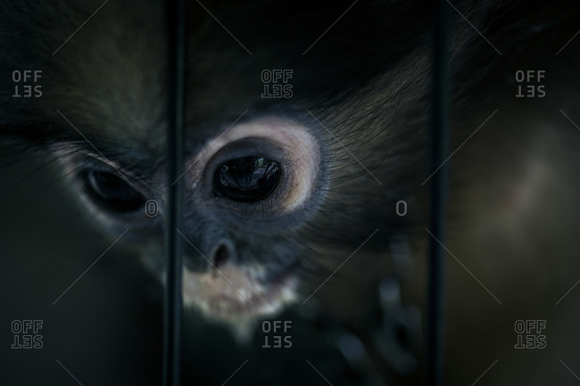 A monkey's face in close up