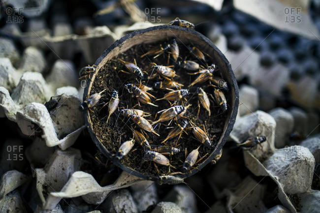 Insects swarm in Thailand