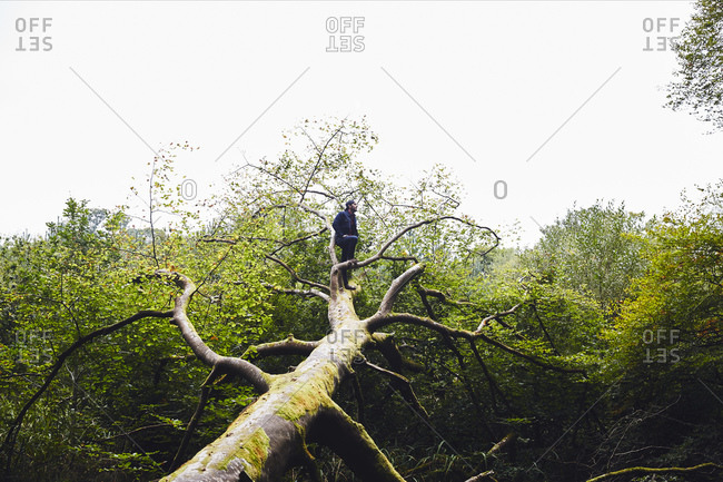 Man standing on fallen tree
