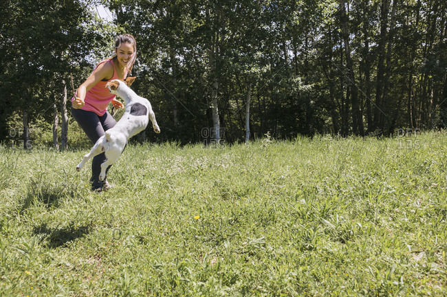 Dog leaping for stick in woman's hand