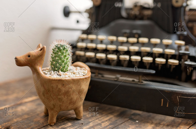 Small cactus next to an old typewriter