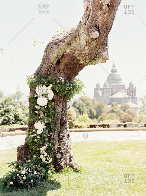 Gnarled old tree decorated with flower garland on grounds of cathedral